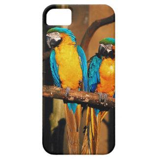 Blått- och guldmacawen mekaniskt säga efter fodral iPhone 5 Case-Mate skydd