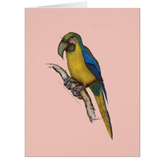 blått-och-gult macaw, tony fernandes jumbo kort