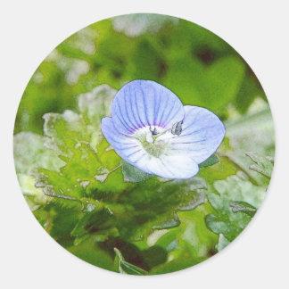 Blått som kryper Speedwell blom Runt Klistermärke