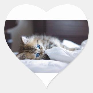 Blått synade Birman kattungelekar Hjärtformat Klistermärke
