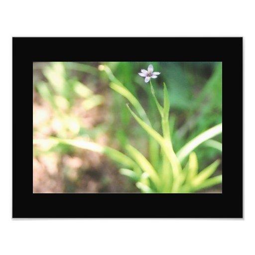 Blått synat gräsnaturfoto fotografi