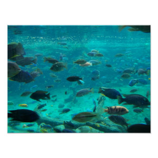 Blåttbassäng av cichlids som simmar runt om design poster