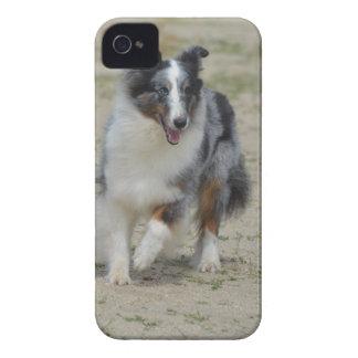BlåttMerle australian shepherd iPhone 4 Case