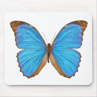 BlåttMorpho fjäril (Menelaus blått Morpho, morf Musmatta