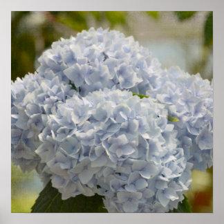 Blåttvanlig hortensia poster