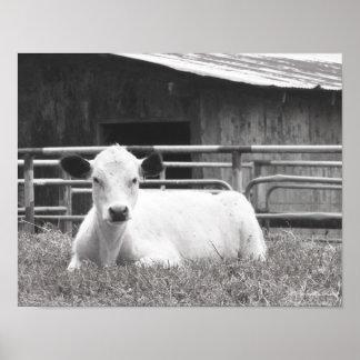 Blk & vitt foto av sött den vitkalvansikte & poster