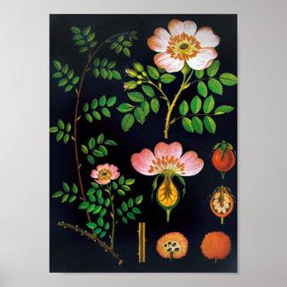 Blom- affisch för vintage poster