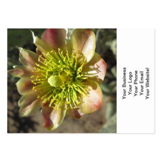 Blom för Cholla ökenblomma Set Av Breda Visitkort