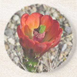 Blom för kaktus för Claretkoppigelkott Underlägg Sandsten