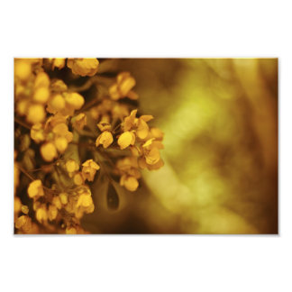 Blom- grengultblommar fototryck