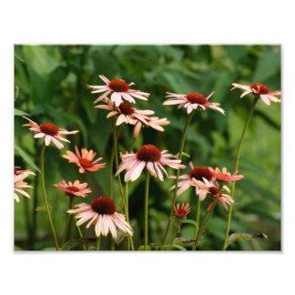 Blom- Petals fotografiskt tryck 11 x 8,5