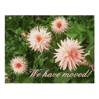 Blom- rörs vykort med Chrysanthemumblomman