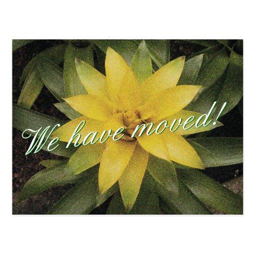 Blom- rörs vykort med den gula blomman