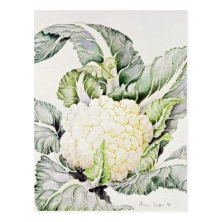 Blomkålstudie 1993 vykort