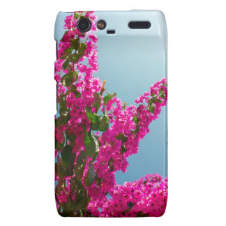 Blomma bougainvillea