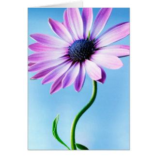 Blomma för daisy för lila- och blåttdaisyblomma hälsningskort