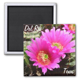 Blomma för kaktus för Del Rio Texas souvenir rosa Magnet