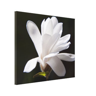 Blomma för kanfasKonst-Stjärna Magnolia Canvastryck