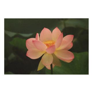 Blomma för lotusblomma för fridsam tropisk trätavla