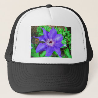Blomma för purpurfärgad Clematis Truckerkeps