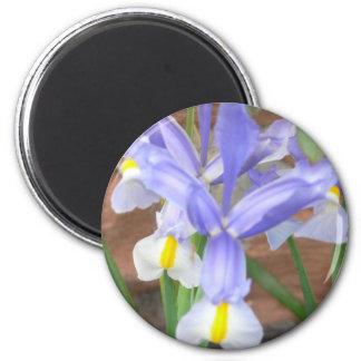 blomma iris magnet