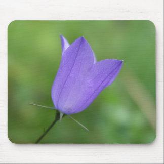 Blomma Musmatta