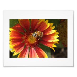 Blomma och biet fototryck