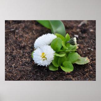 Blomma på kanfas - högkvalitativt foto print