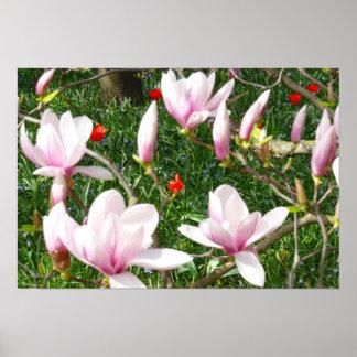 Blomma rosa Magnolia 01 Poster