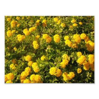 Blommabild Fototryck