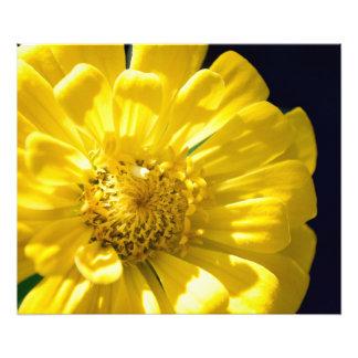 Blommafoto Fototryck