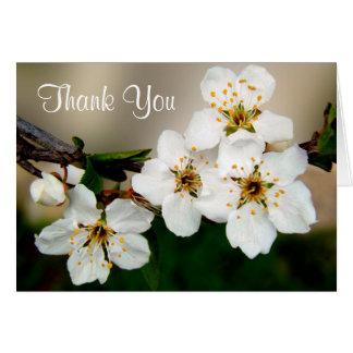 Blommar den körsbärsröda blommar för vit tack hälsningskort