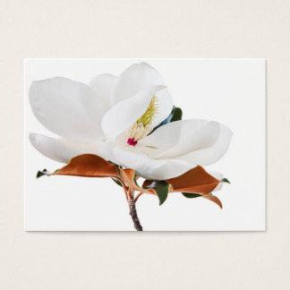 Blommar för Magnolias för Magnoliablommavit blom-