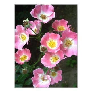 Blommarvildro i hemlighetträdgården fototryck