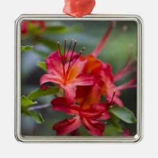 Blommas Azaleas Pentanthera för ljus röd vår Julgransprydnad Metall
