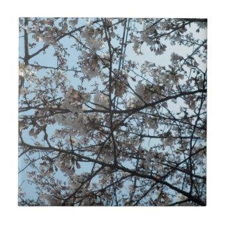 Blommas körsbärblommar liten kakelplatta