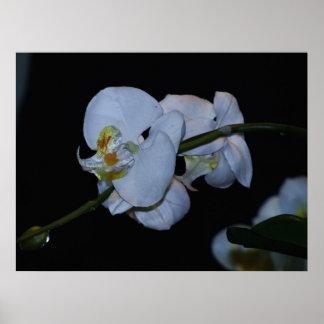 blommavit poster