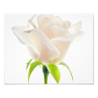 Blommigt för bakgrund för frikänd för fototryck