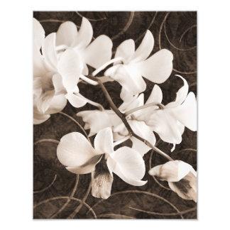 Blommigt för bakgrund för svart för Sepia för Fotografiskt Tryck
