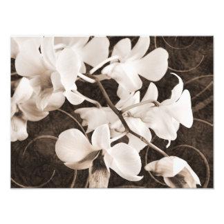 Blommigt för bakgrund för svart för Sepia för Fotografier
