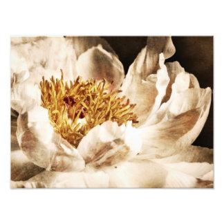 Blommigt för bakgrund för svart för Sepia för Fototryck