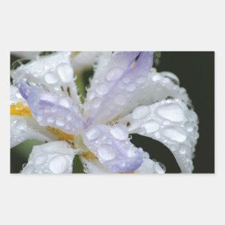 Blommigten regnar Drop.jpg Rektangulärt Klistermärke