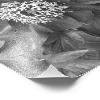 Blommigten varvar B&W Fototryck