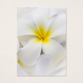 Blommor för blommigt för Frangipani för