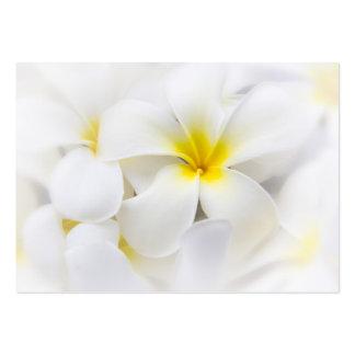 Blommor för blommigt för Frangipani för vitPlumeri Set Av Breda Visitkort