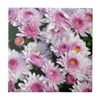 Blommor för rosavårchrysanthemum liten kakelplatta