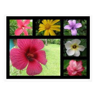 Blommor från Costa Rica Vykort