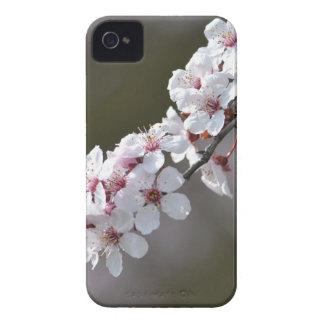Blommor i vår Case-Mate iPhone 4 fodral
