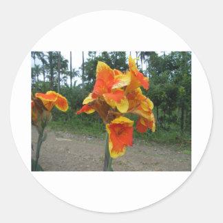 Blommor på växter, Costa Rica. Runt Klistermärke