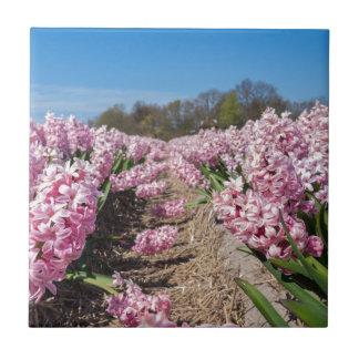 Blommor sätter in med rosa hyacint i Holland Kakelplatta